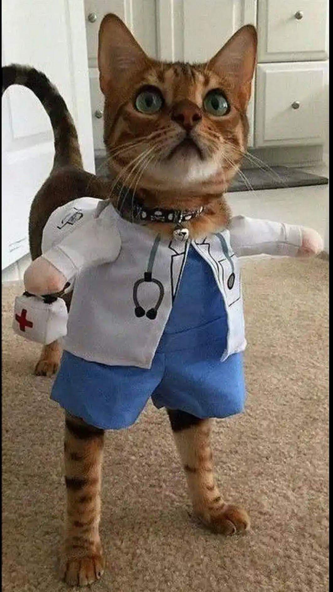 Прикольные картинки врачей животных