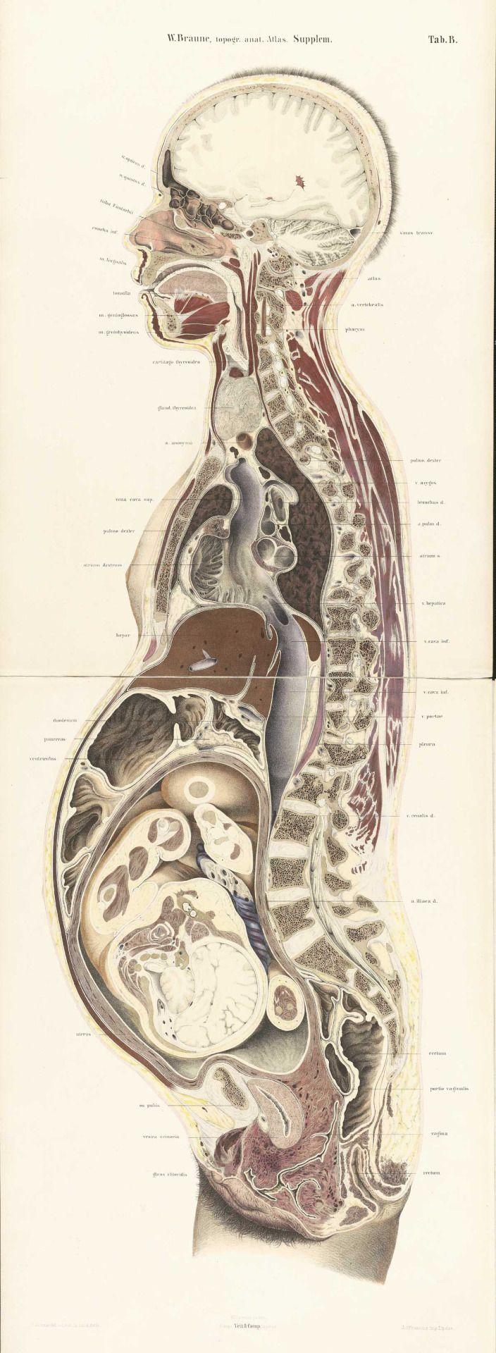 Pin On Gynecology