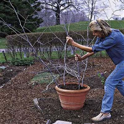 Diy stick trellis in a pot