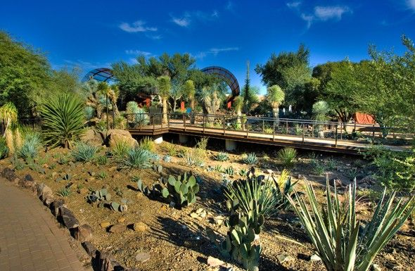 Gentil The Desert Botanical Garden: Phoenix, AZ