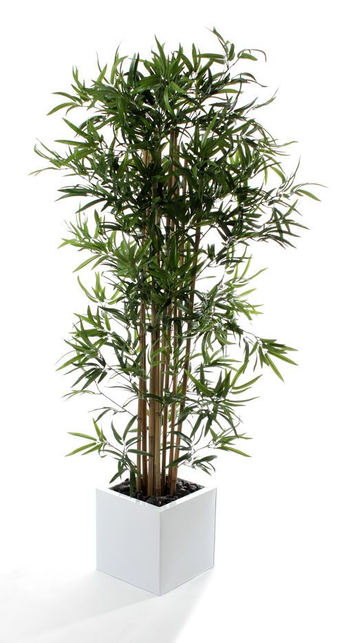 Buy Artificial 6ft Golden Bamboo Tree - Artificial Silk Plant and Tree Range Japanese Bamboos with Natural Stem from Artplants.co.uk