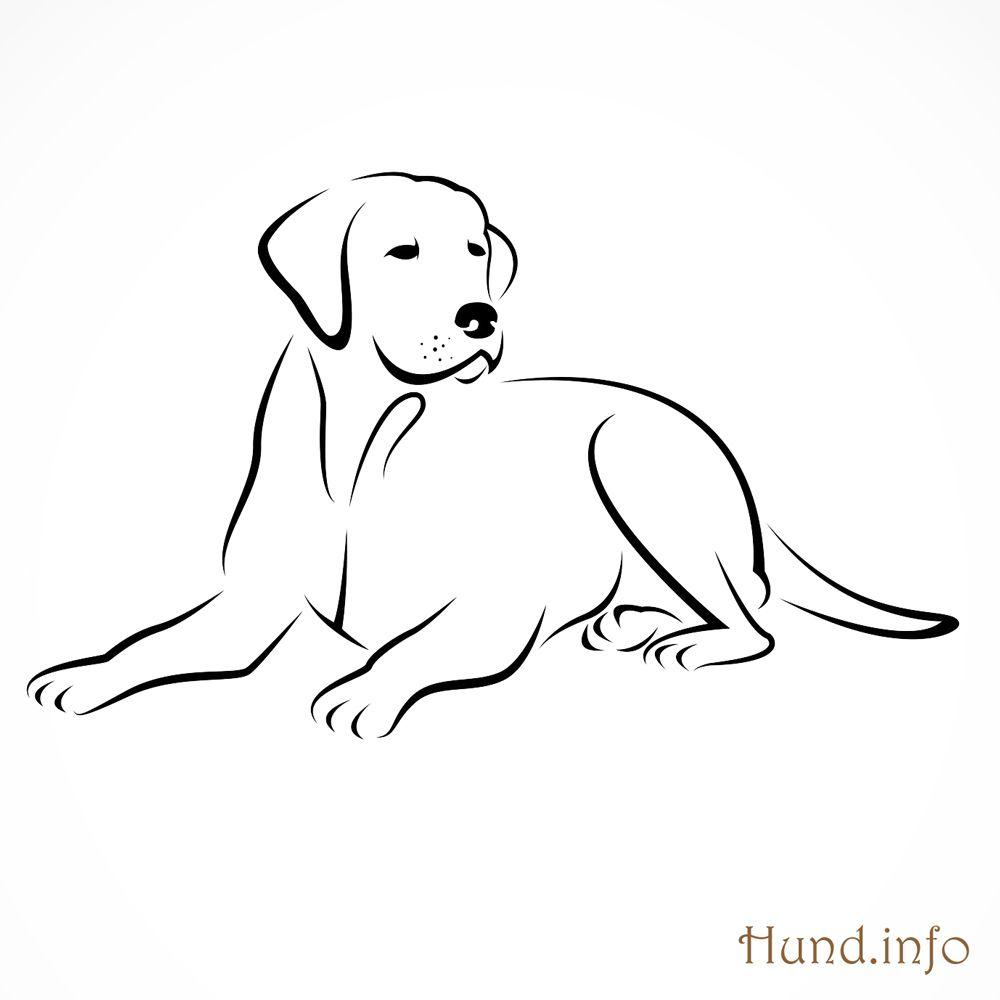 Ausmalbilder mit Hunden - Hunde  Hund tattoo ideen, Hunde