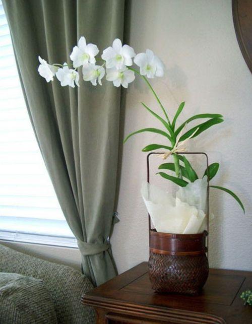 exklusive ideen fr dekoration mit orchideen weie farben - Gestaltungsideen Durch Orchiden