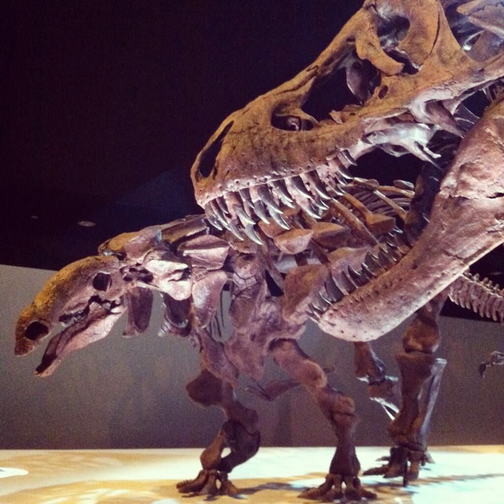 Twitter / maitri: HAIL HYDRA #fossilfriday @Houston Museum of Natural Science ...