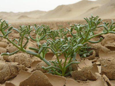 saharadesertanimalsandplants fantazmagoria27s