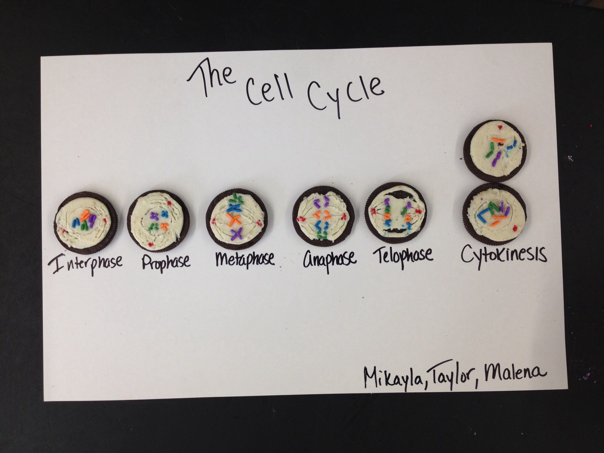 hight resolution of cell cycle mitosis model oreo cookies sprinkles nonpareils and toothpicks for drawing lines