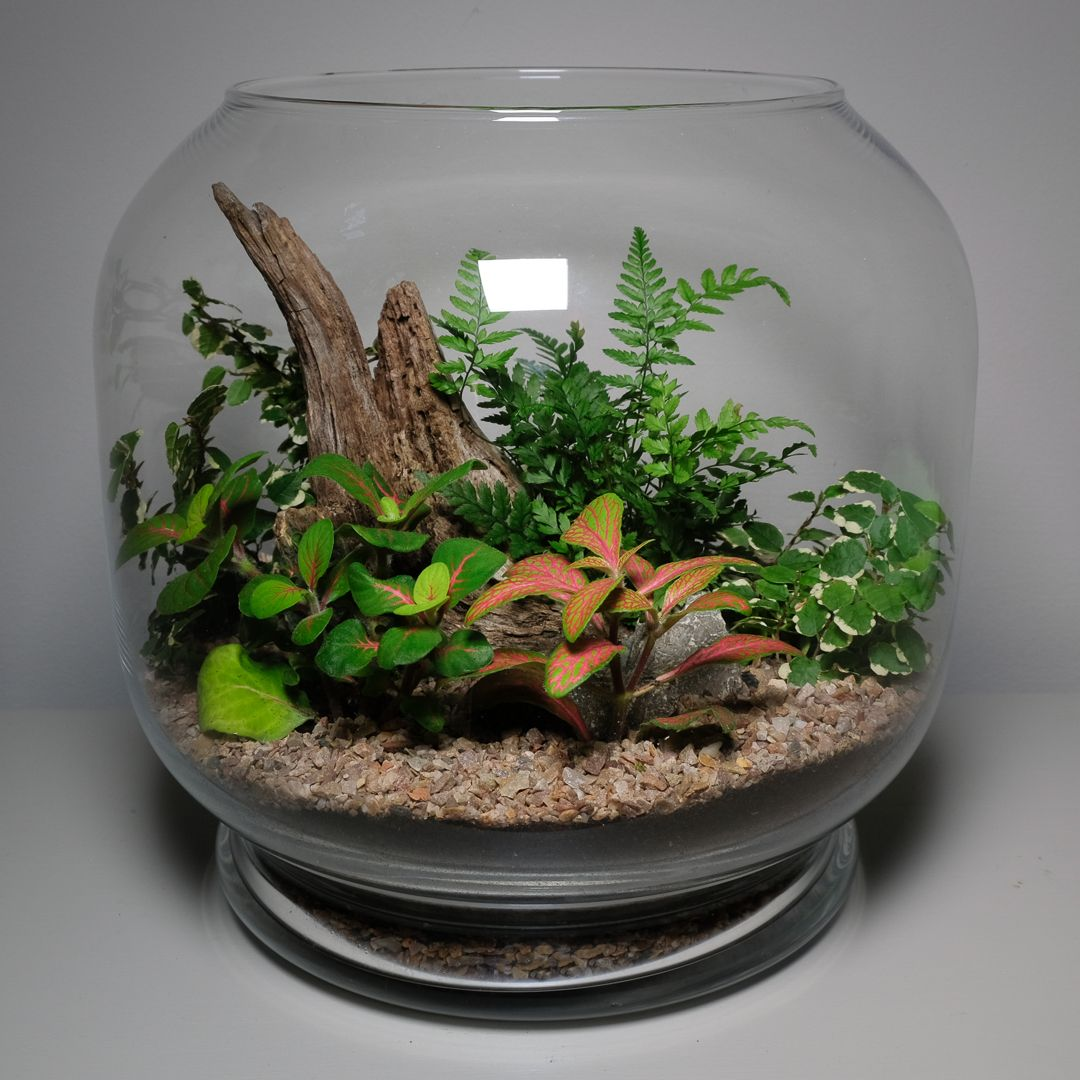 Large Glass Terrarium Filled With Plants And Wood By Jo Wyeth