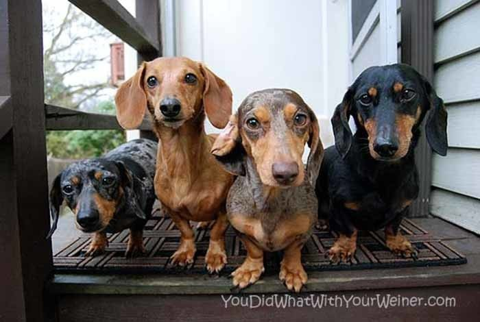 Youdidwhatwithyourweiner Com Fun Outdoor Adventures With Our