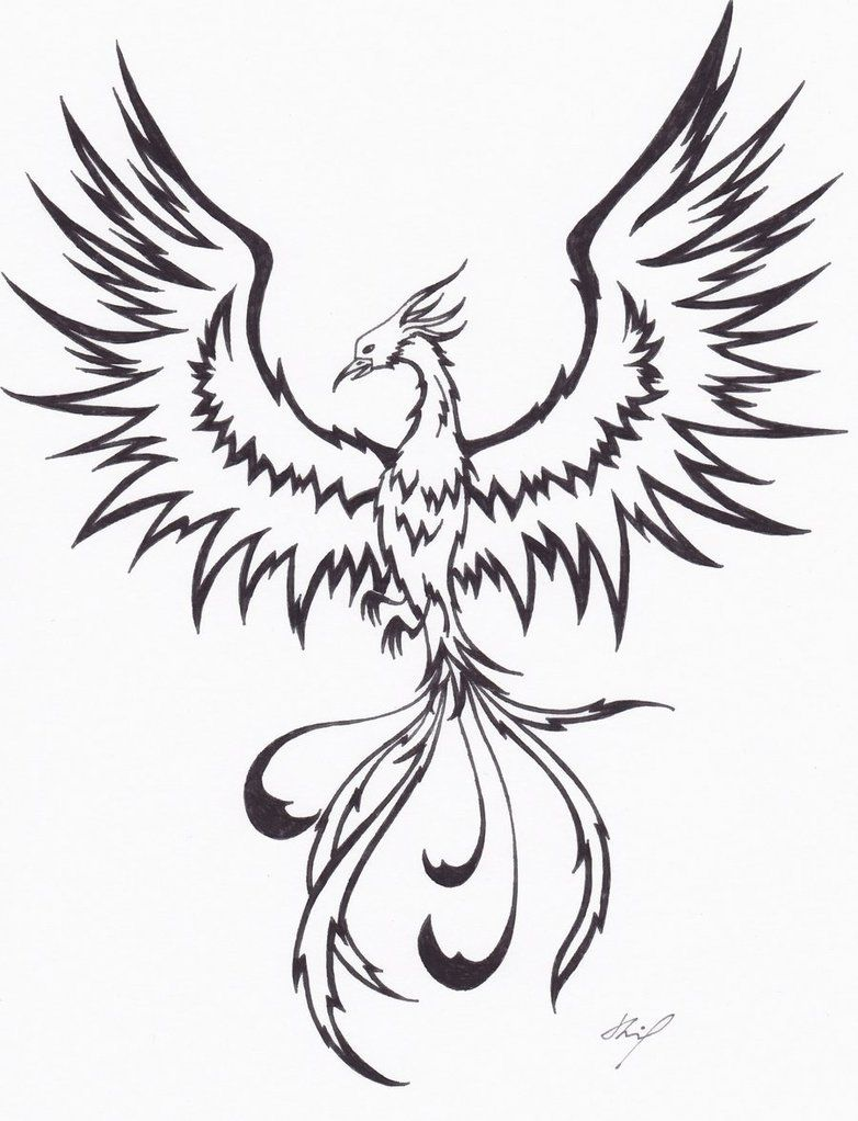 Fawkes Phoenix Drawing Google Search Tattoos Tatouage Phoenix