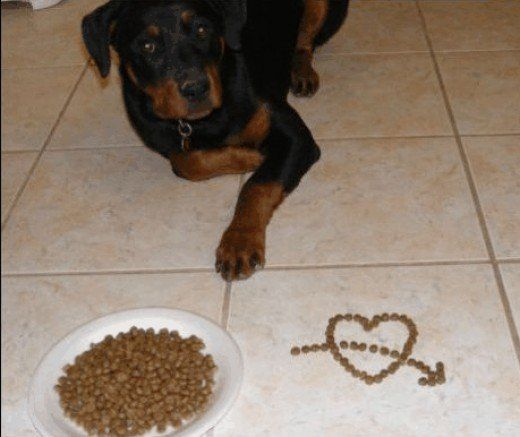 Homemade Recipes For Dogs With Sensitive Stomachs Dog Food