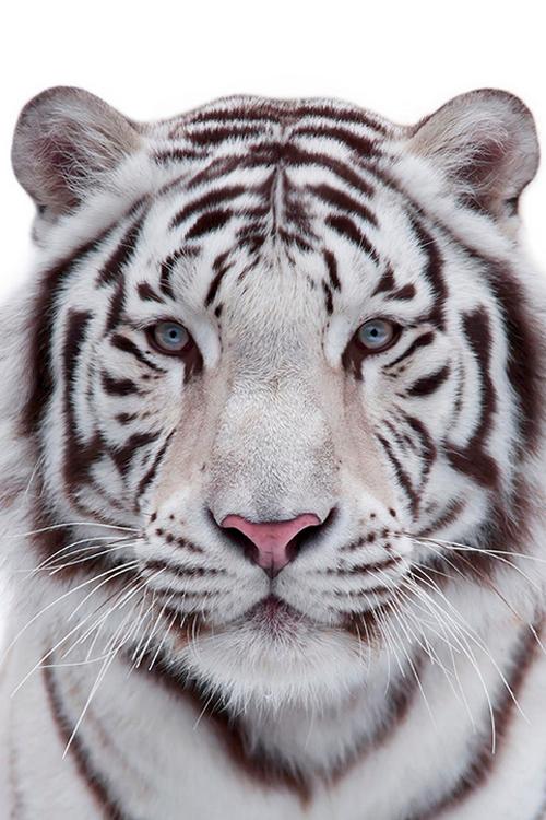 Plasmatics Life Eye To Eye By Olga Gladysheva Beautiful O Animals Animals Beautiful Animals Wild