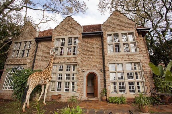 Giraffes join guests for breakfast and dinner at iconic Giraffe Manor