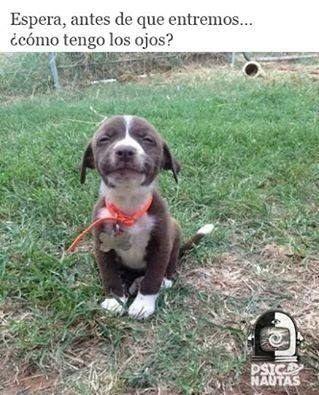 21 Pachequisimos Memes Del 420 Para Pasarselos A Tu Amigo El Frito Fotografias De Perros Perros Y Gatos Tiernos Perros