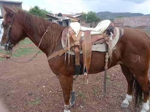 Caballo Alazan Cuarto De Milla En Venta | Caballo | Pinterest | Horse