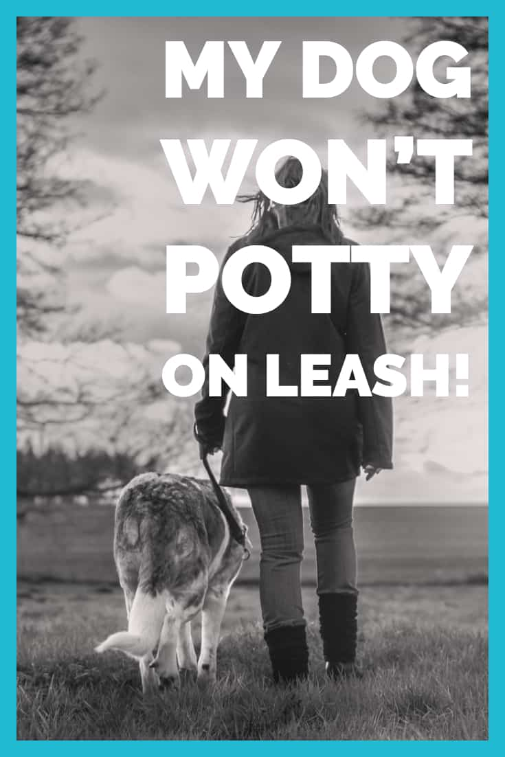 My Dog Won T Potty On Leash In 2020 Dogs Leashes Dog Walking