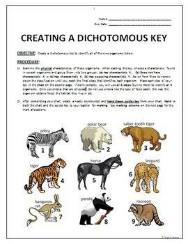 Dichotomous Key Create A Dichotomous Key Activity Editable Dichotomous Key Activities Adaptations Activities Fun dichotomous key worksheet pdf