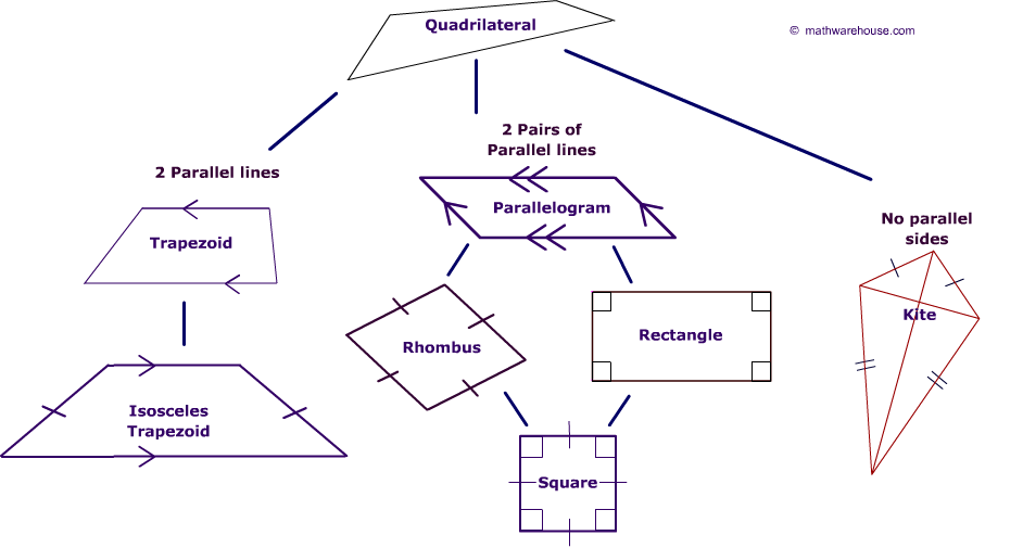quadrilateral family tree explore rules of quadrilaterals their rh pinterest com schematic diagram of quadrilateral with definition