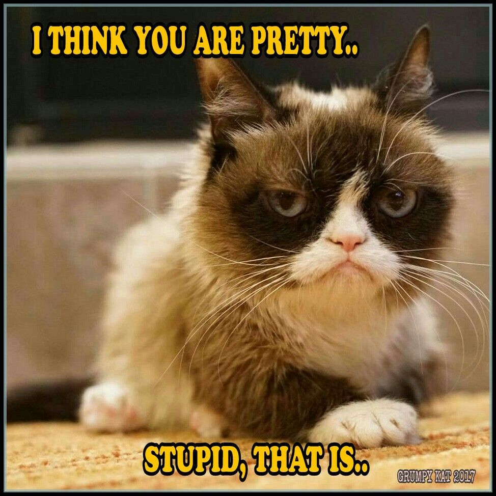 Cat Quotes: Another Grumpy Cat Meme By The Other Grumpy Kat 2017