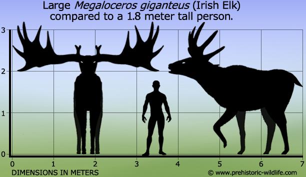 Megaloceros #prehistoriccreatures