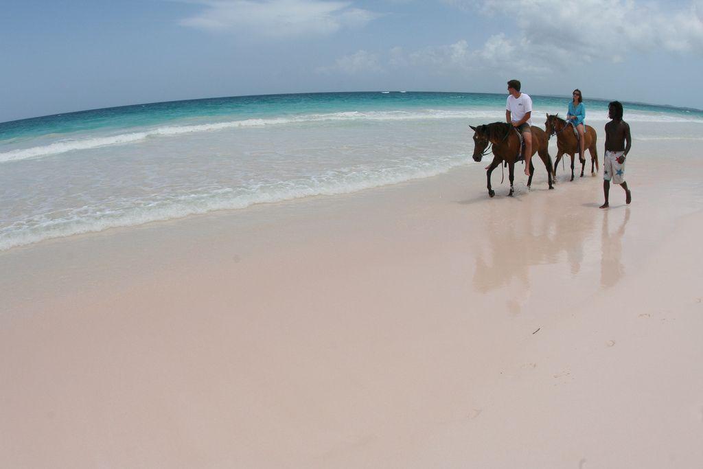 eleuthera island horseback ridink on the pink beach