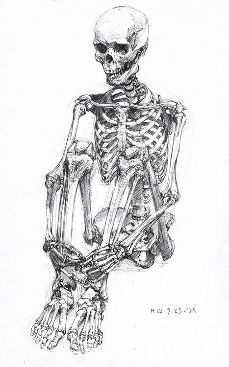 Nahash Baumgartner Skeleton Drawings Anatomy Art Skeleton Art