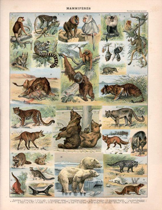 Wall Art Botanical Print Mammals in Nature Wildlife Print Nature Poster Animal Poster Vintage Print Wildlife Poster Whales