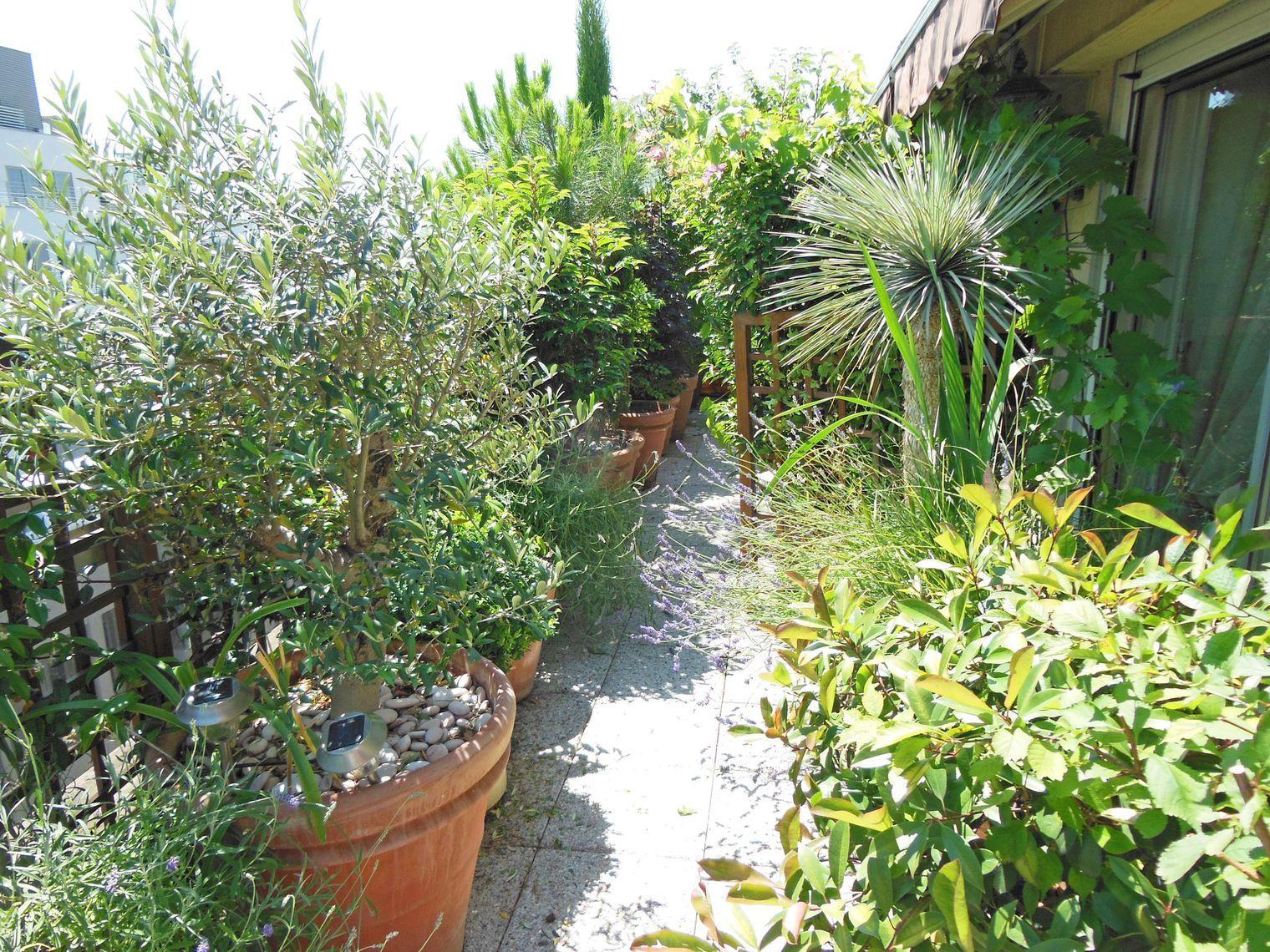 Plantes Pour Terrasse Sud Est balcon plein sud : plantes et aménagement | jardin au balcon