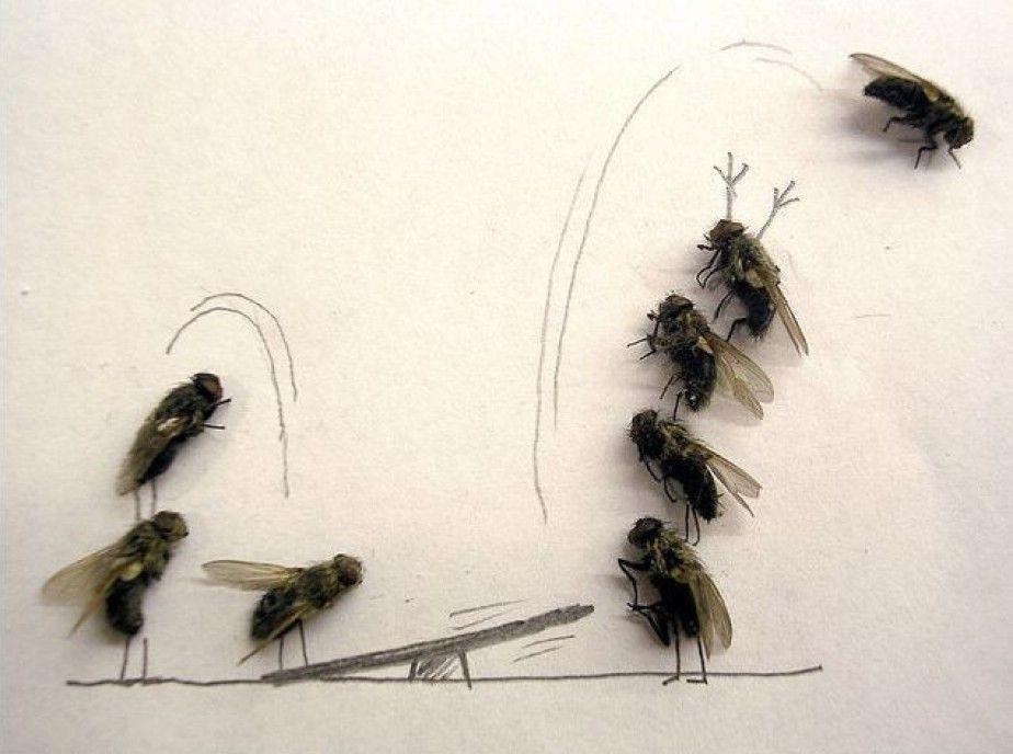 Tote Fliegen gegen Langeweile im Büro | JUICED