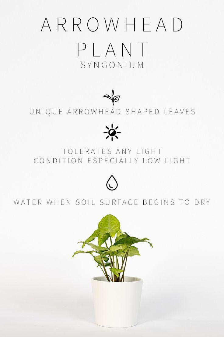 Master List of Low Light Indoor Plants #houseplant