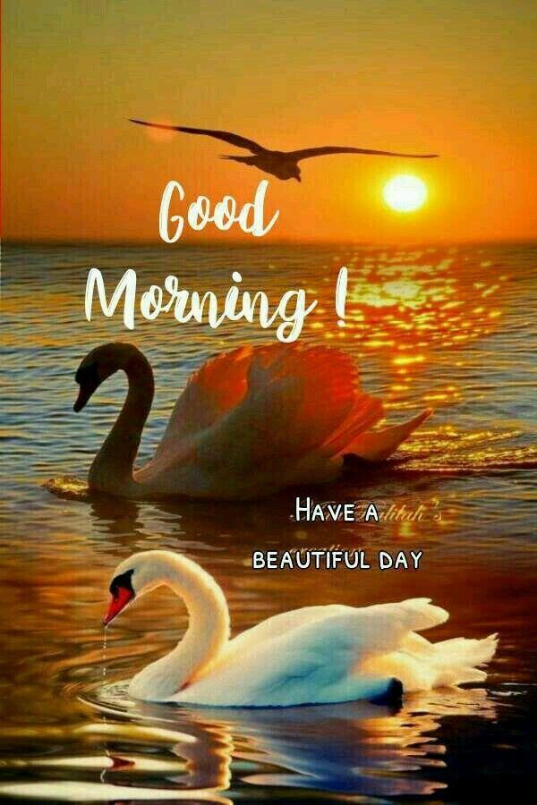 Pin By Paula Afonso On Good Morning Cute Good Morning Images Good Morning Beautiful Quotes Good Morning Cards