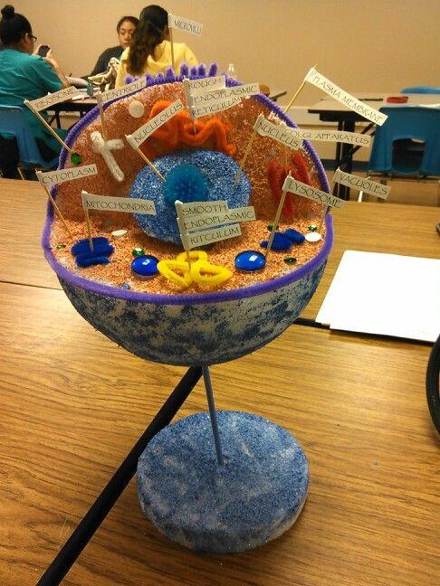 3D model of Human Cell For the Kids Pinterest School