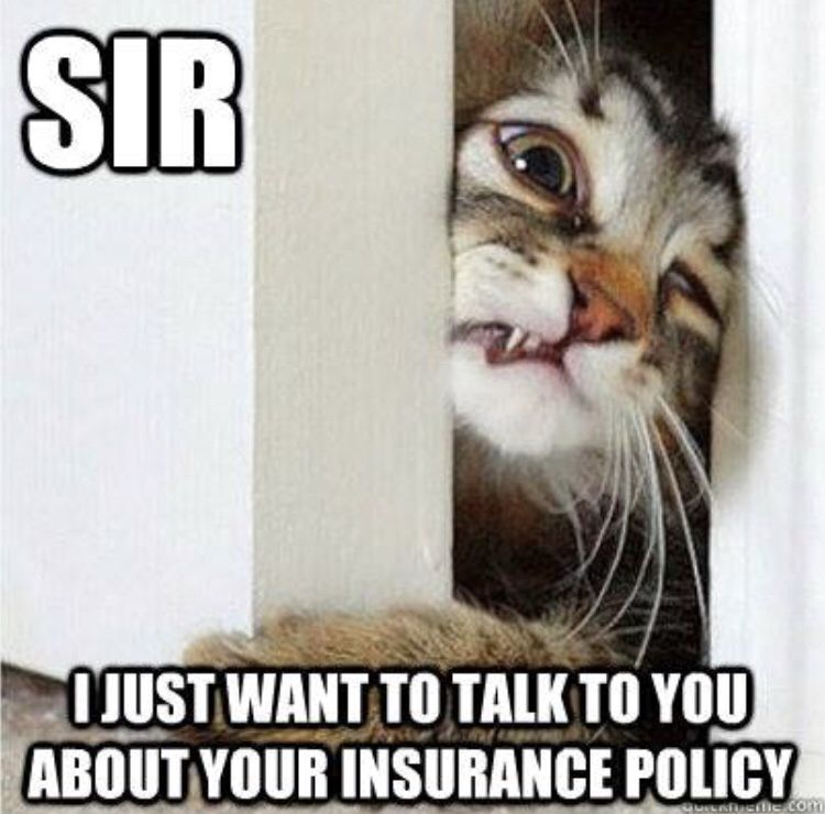 Insurance Humor With Cats Insurance Meme Insurance Humor Insurance Agency