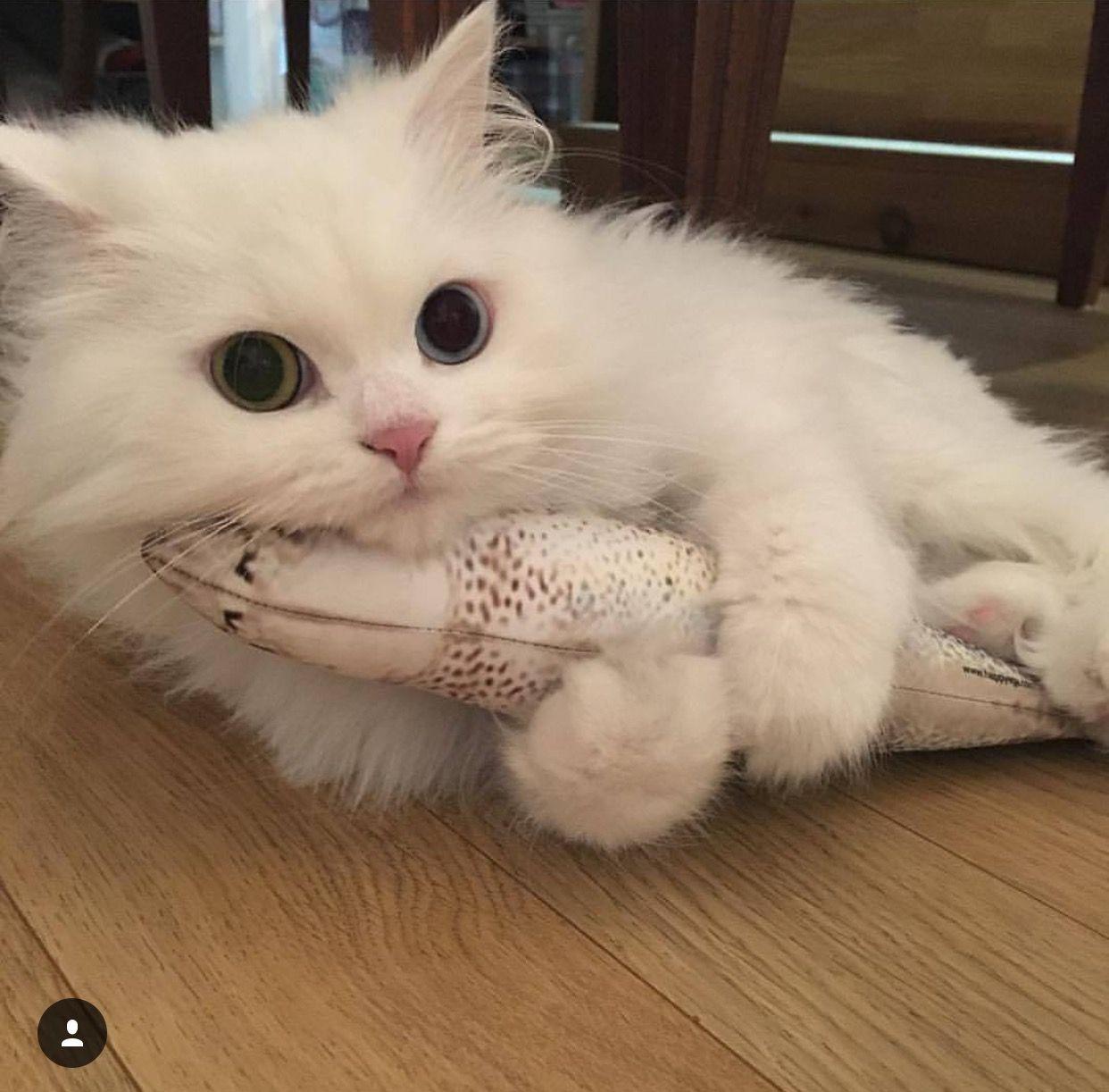 I Toucha Da Fishy Album On Imgur Cute Baby Animals Cute Cats Cats