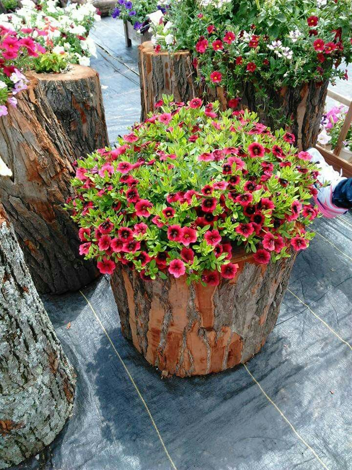 Not using all your firewood, well you can make these with just a stump and a flower potted. How beautiful!!