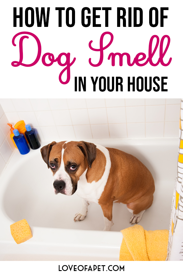 A Beginner's Guide to Get Rid of Dog Smell In Your House