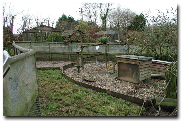 Meerkat pen rebuild 2008 ...
