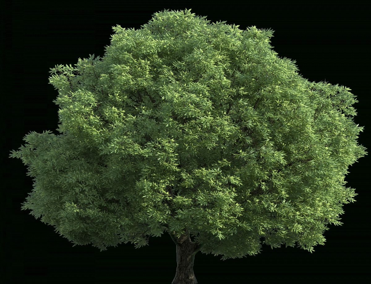 10 Filteype Png Tree Png Image Icon Tree Images Png Images