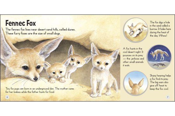 Fennec Fox Fennec Fox Furry Fox Animals