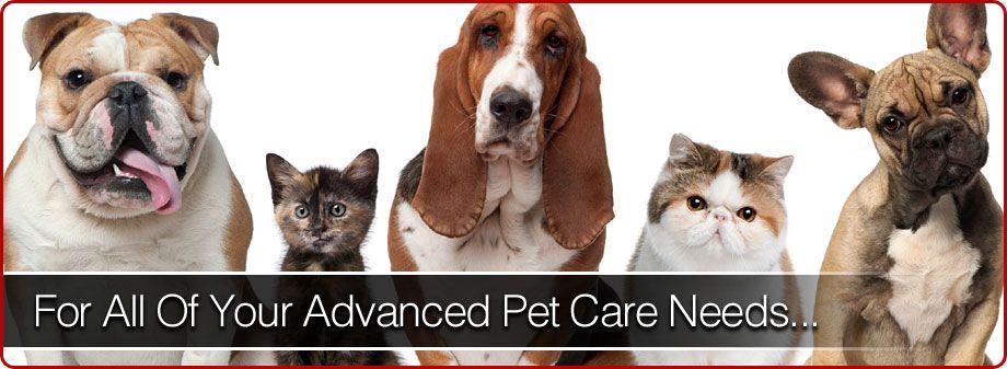 Animal Emergency Clinic West Cleveland Ohio Pet Doctor Aec West Animal Hospital Animal Doctor Pets