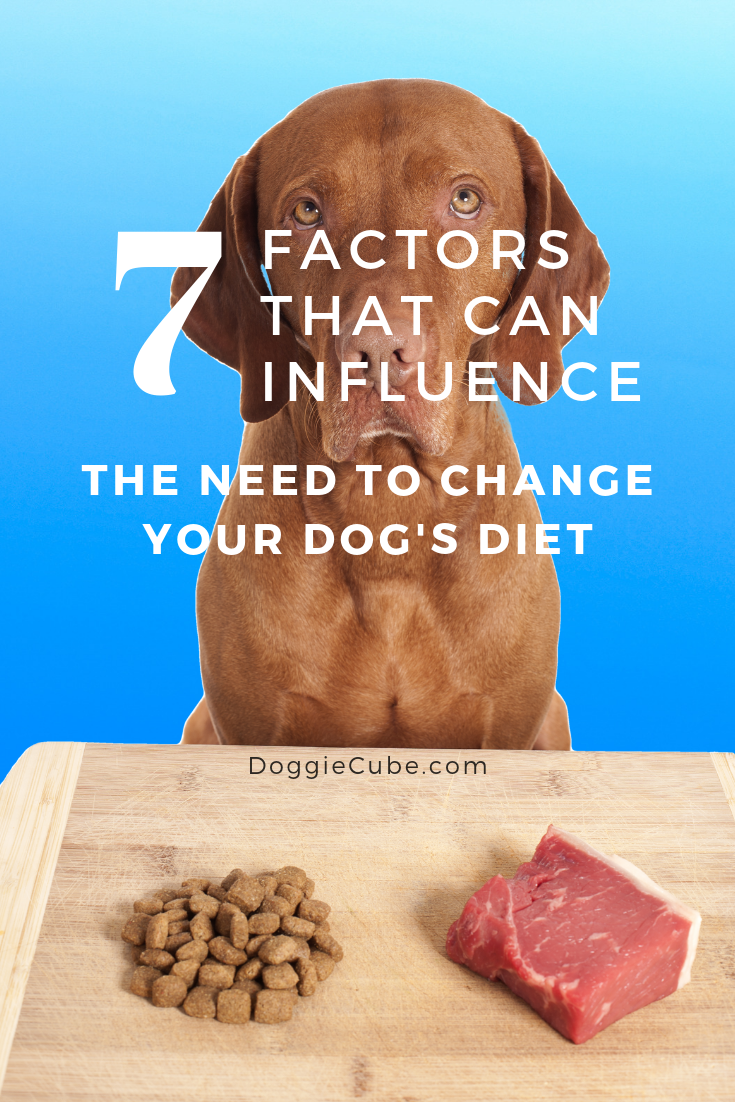 7 Factors That Can Influence The Need To Change Your Dog S Diet Doggie Cube In 2020 Dog Diet Dog Nutrition Healthy Dog Treats Homemade