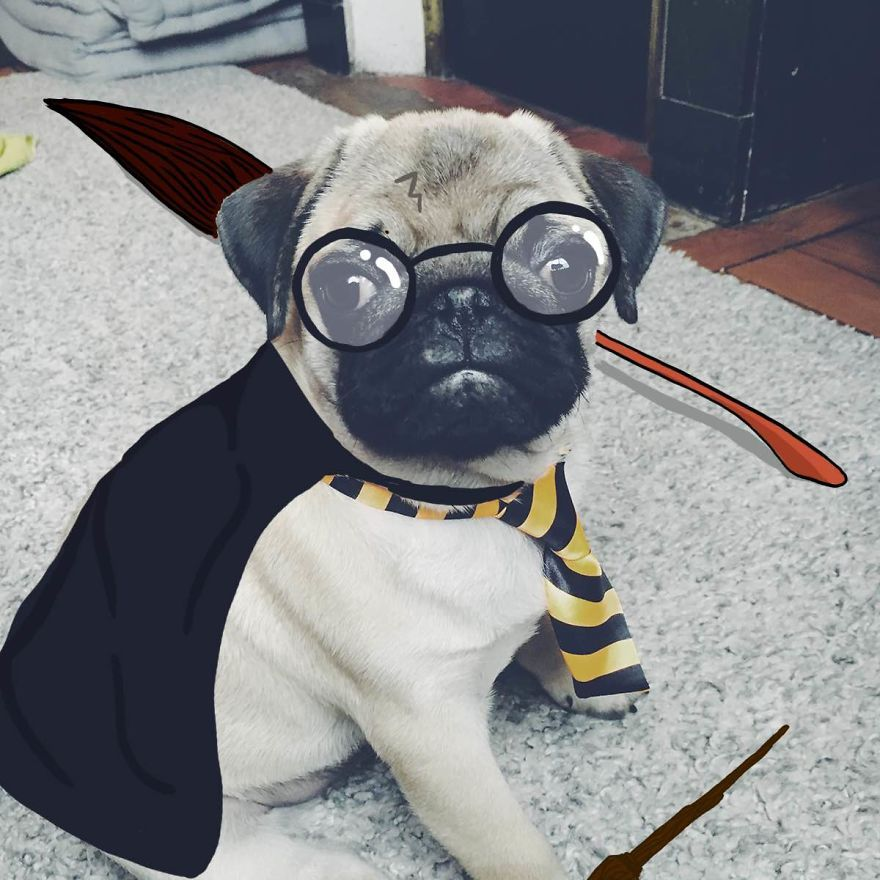 Harry Pugter