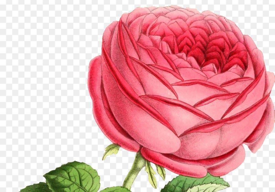 Wow 27 Download Gambar Bunga Untuk Kolase Watercolor Pink Flowers Png Download 1735 2457 Free Bunga Foto Kolase For A Bunga Menggambar Bunga Wallpaper Bunga