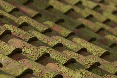 How To Mix Zinc Sulfate Powder To Kill Moss Roof Clay