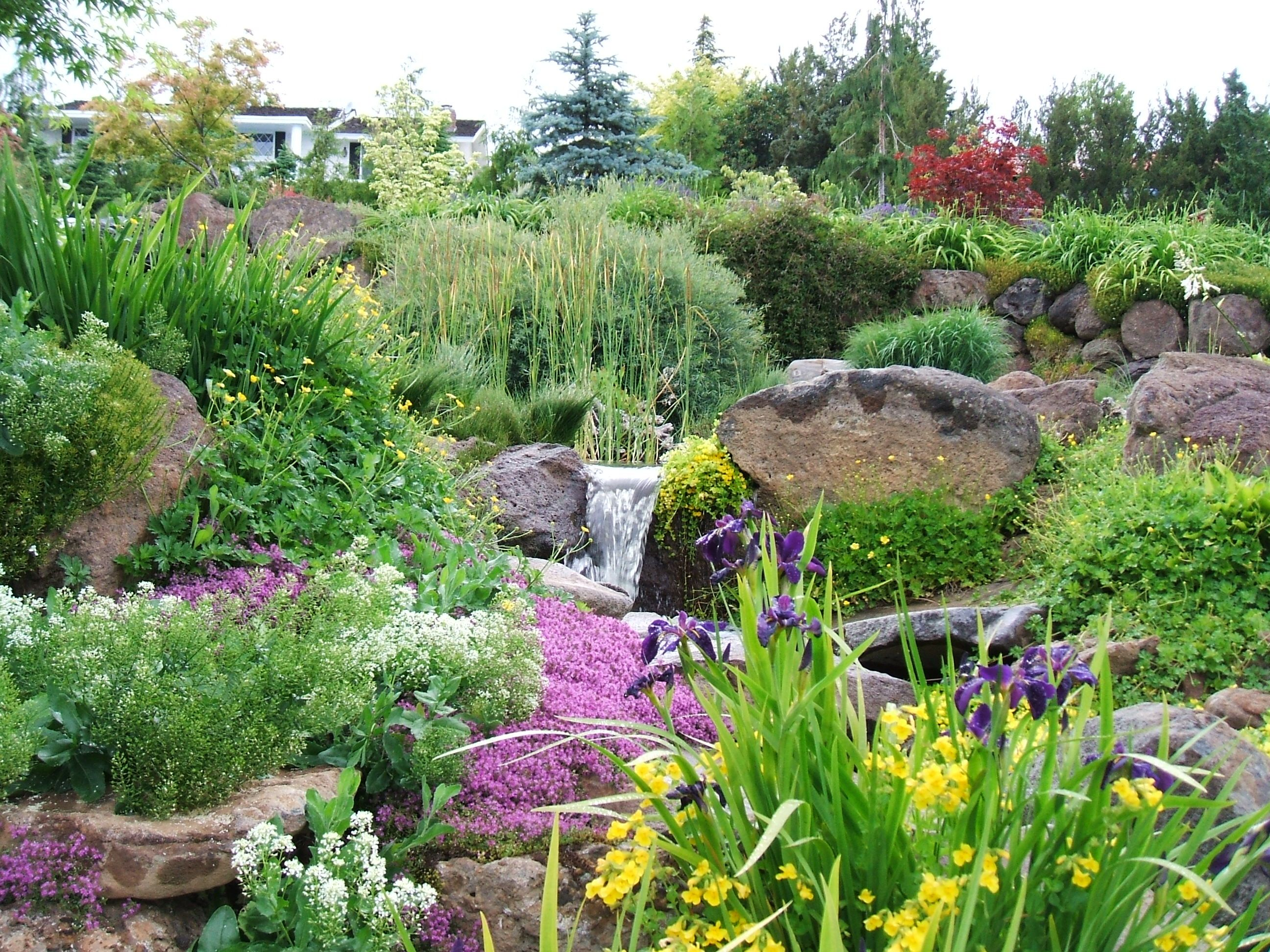 Here Is The Bog Garden In The Yakima Feature In Full Bloom Landscaping With Rocks Pond Landscaping Backyard Water Feature