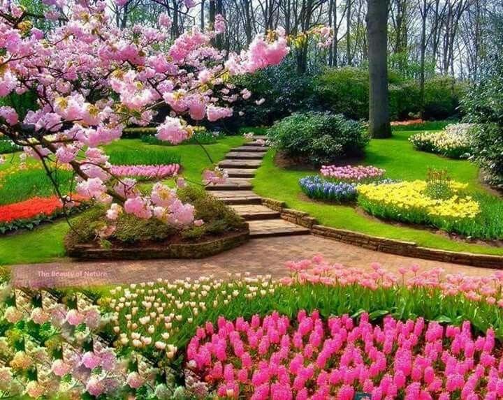 Pin de carmen hb en jardines parques rboles r os pinterest parque jardines y r o - Arboles bonitos para jardin ...