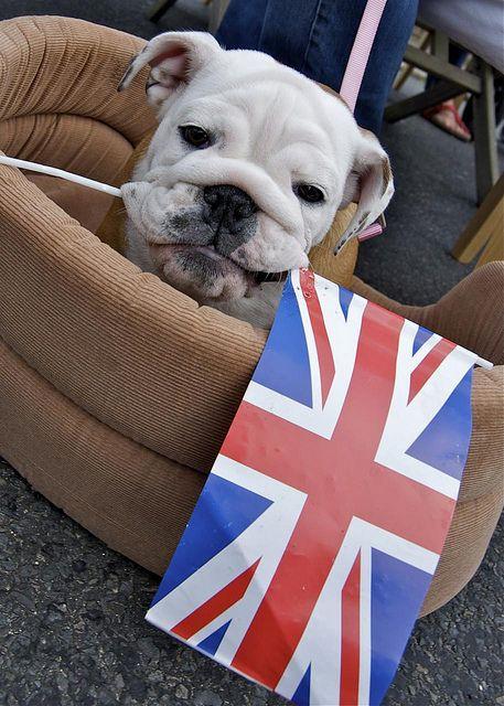 British Bulldog Royal Wedding Street Party British Bulldog
