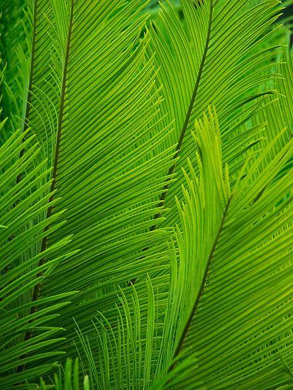 Verde colores pinterest verde hoja y textura - Color verde hoja ...