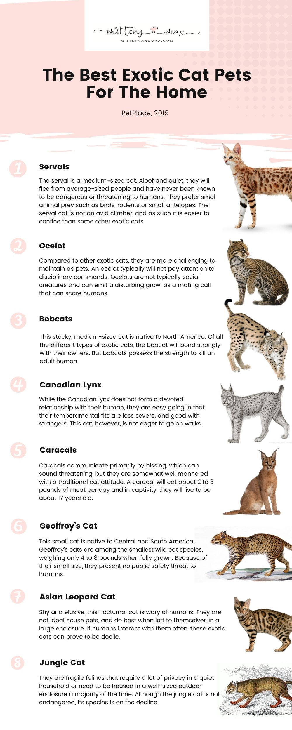 Pin On Cat Facts And Care Tips