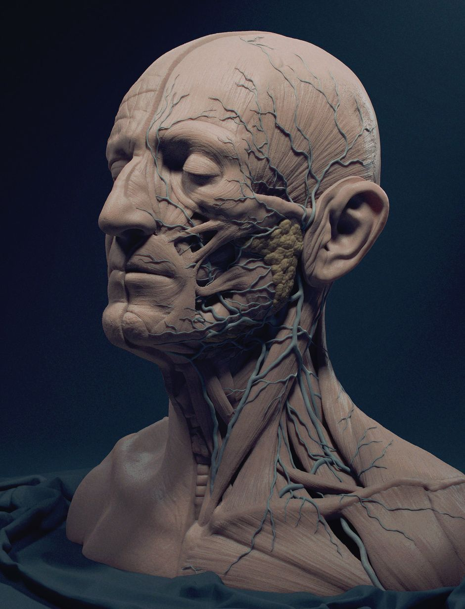 Ecorche by Adam Skutt | Medical Visualization | 3D | CGSociety ...
