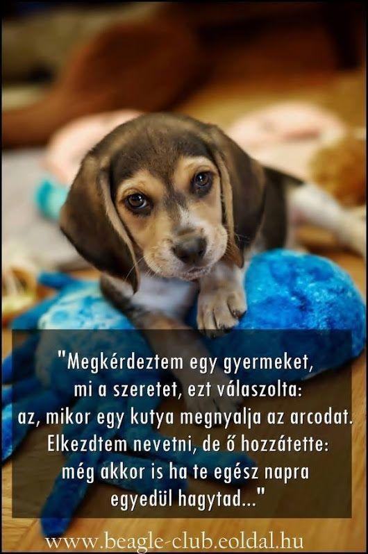 vicces kutyás idézetek Pin by Klemi on Kutya Hűség ♥️   Kutyás idézetek, Lelkesítő
